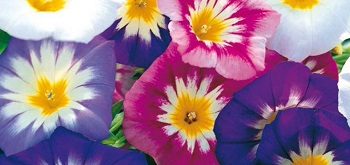 linea dotto fiori