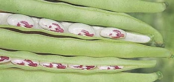 linea dotto legumi