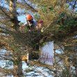 potare gli alberi