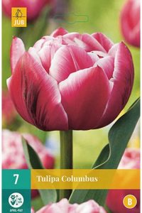 tulipano_columbus