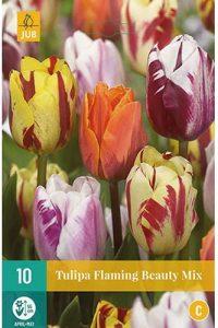 tulipano_flaming_beauty_mix