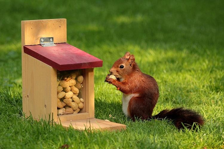 alimentare gli scoiattoli