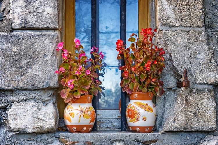 Piante per i terrazzi ombreggiati - Begonia