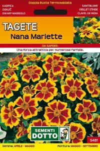 Tagete-Nana-Mariette