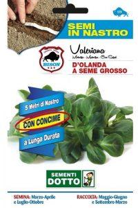 Valeriana-DOlanda-a-Seme-Grosso-Semi-in-nastro-1