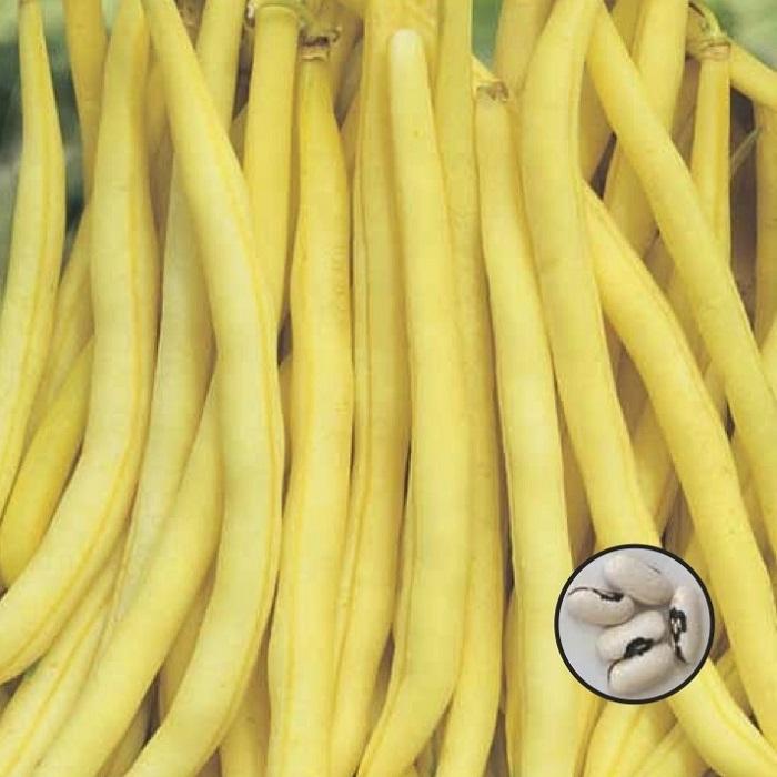 coltivare i Fagioli nani - Fagiolo Nano Brittle Wax-Mangiatutto