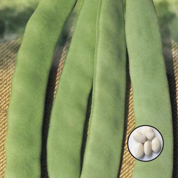 coltivare i Fagioli nani - Fagiolo nano Corallo