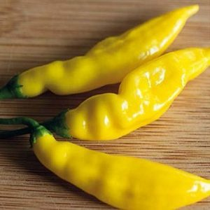coltivare-il-Peperoncino-Lemon-Drop
