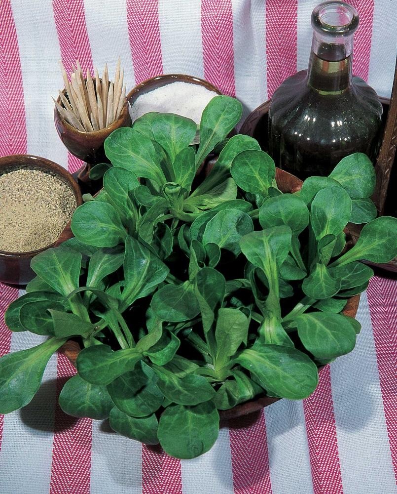 coltivare la valeriana - Valeriana Verde Cuore Pieno