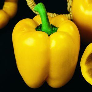 fiori di colore giallo - Peperone-Quadrato-dAsti-Giallo