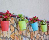 piante per piccoli vasi