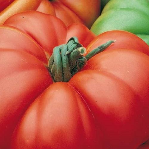 Coltivazione dei pomodori sul terrazzo - Pomodoro Marmande