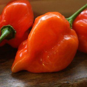 coltivare il Peperoncino Habanero - Peperone Habanero