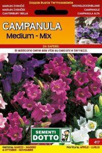 Campanula-Medium-Mix-