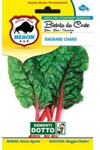 Bietola-da-Coste-Rhubarb-Chard
