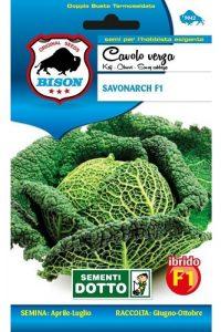 Cavolo-Verza-Savonarch