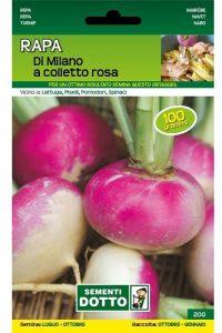 Rapa-di-Milano-a-Colletto-Rosa
