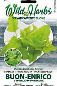 Buon-Enrico-o-Spinacio-di-Montagna