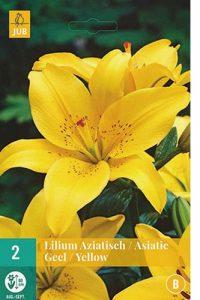 lilium_asiatico_giallo