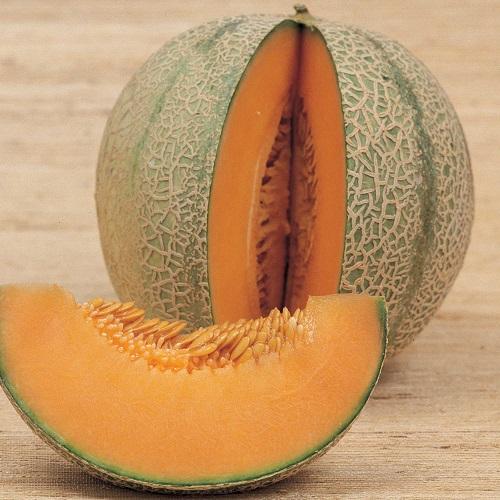 Frutti e verdure utili alla salute - Melone Retato degli Ortolani