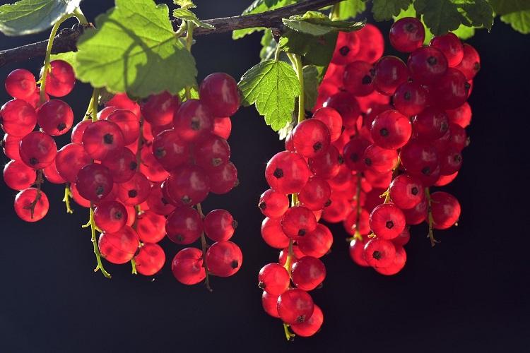 Frutti e verdure utili alla salute - Ribes