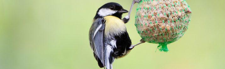 proteggere gli uccellini selvatici in inverno